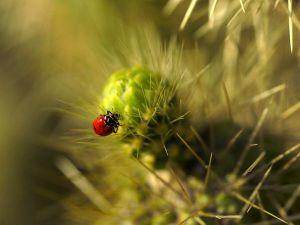 lady-bug_602_600x450
