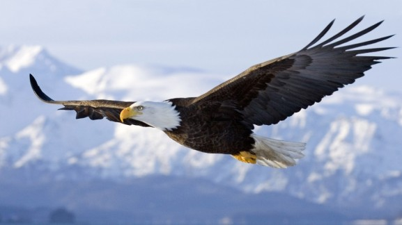 soaring eagle - Lucia's blog
